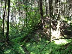 Смоленските гори