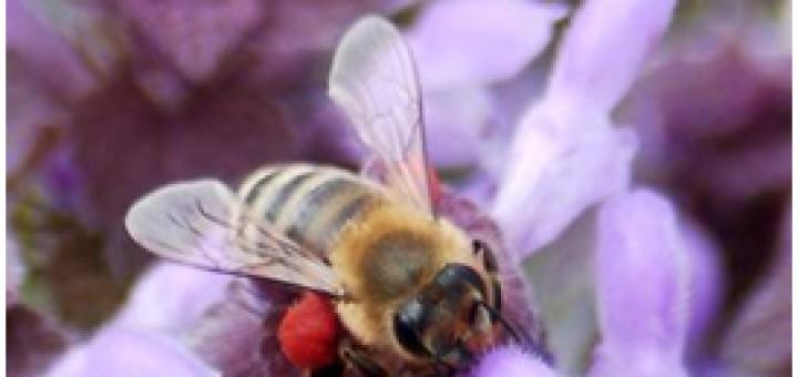 Фундаменталното значение на пчелите